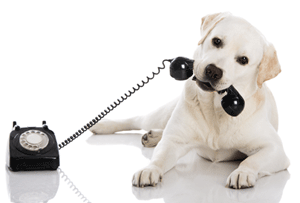 Pingree Grove, Burlington, Genoa dog walking and pet sitting